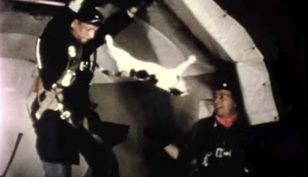 That Time the Air Force Tossed Cats in Zero Gravity