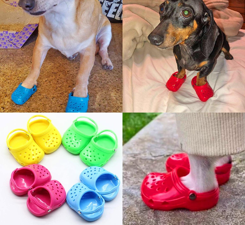 DOG CROCS - Koiran crocsit
